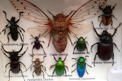 Collection insectes