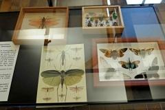Exemple d'exposition en vitrine (non fournie)