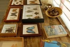 """Exemple de collection entomologique dans installation expo """"Chasseurs de plantes"""""""